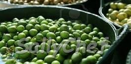 oliva confetto